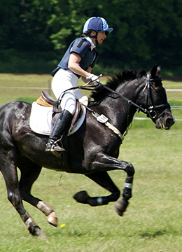 When exercised in hot, humid weather, a horse may lose up to four gallons of sweat per hour.