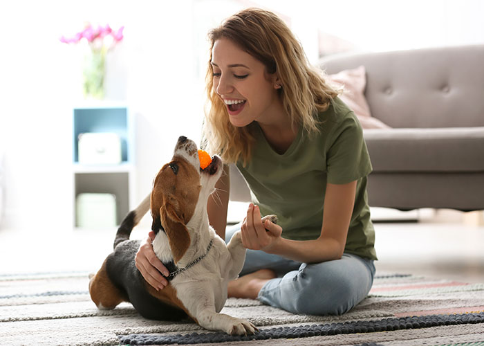 Woman playing with beagle inside