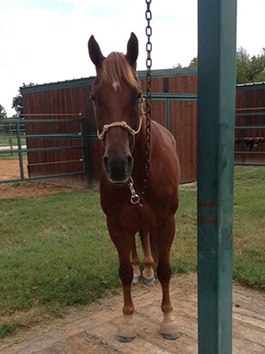 Waylon at his very own Patience Pole at the Clinton Anderson Ranch
