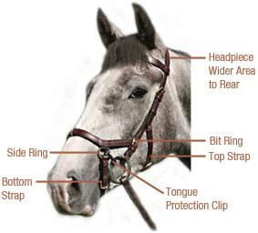 Figure 1: Micklem Multibridle