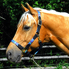 Intrepid Highland Halter, $48.95