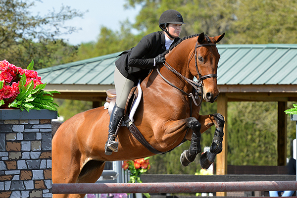 The Ultimate Guide to Buying an Equestrian Helmet – The Cheshire Horse